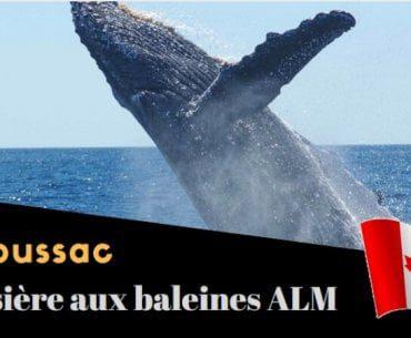 Canada : Croisières aux Baleines AML à Tadoussac